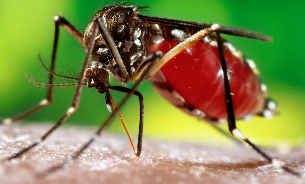 South Delhi, dengue, Municipal Corporation, North Delhi Municipal Corporation, NDMC, Vector- Borne Diseases