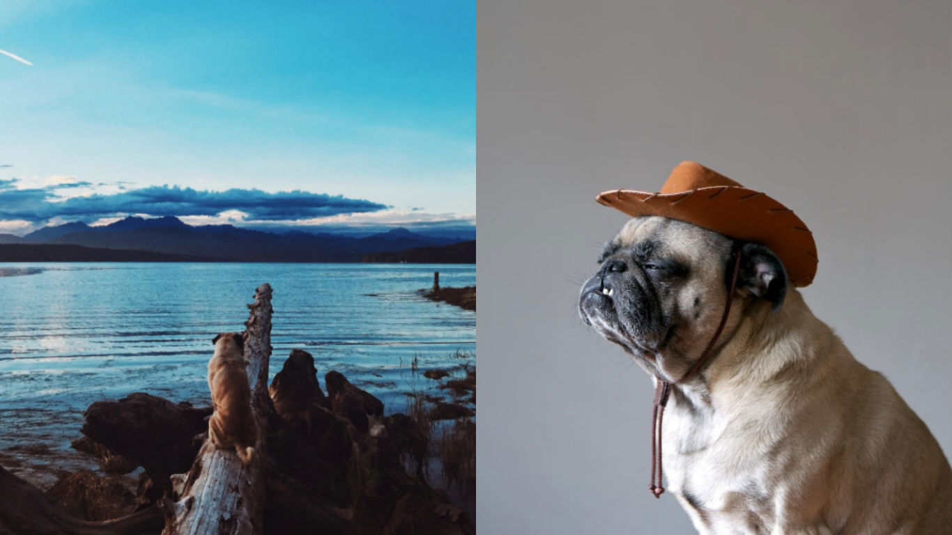Dog, travel, goals, travel diaries, awww, pug, Jeremy Veach, Norm