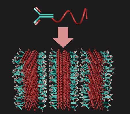 polymer , thermodynamic interactions, tuberculosis, MIT engineers, antibodies, malaria,