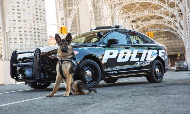 Ford Motors, Police Responder hybrid sedan