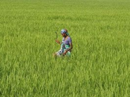 ASSOCHAM, agriculture sector, agriculture, Business, NewsMobile, Mobile News, India