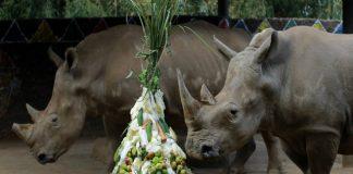Rhinos, Assam, September 22, Awareness, Rhinoceros,CityScape, Government