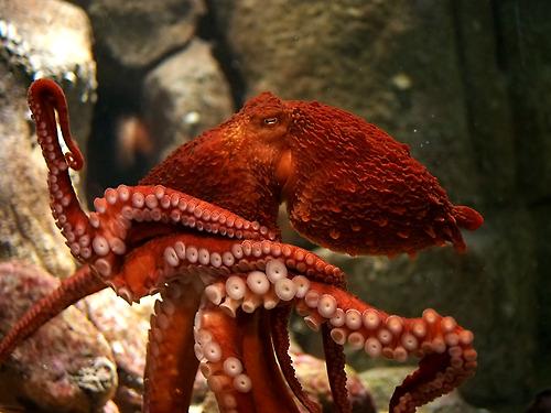 baby octopus, virginia aquarium and marine science center, Marine life, Facebook, trending video