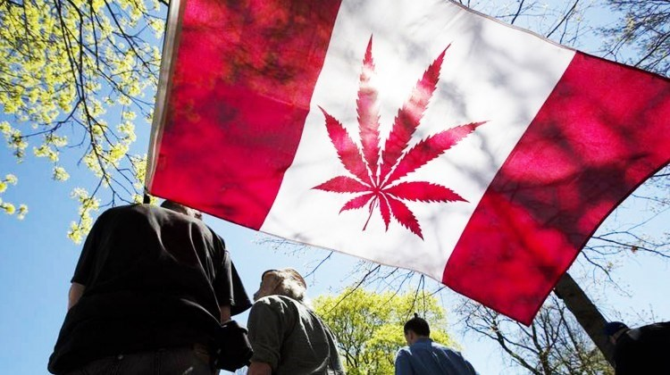 Canada, second, country, legalise, marijuana, Overseas, NewsMobile, Mobile news, India