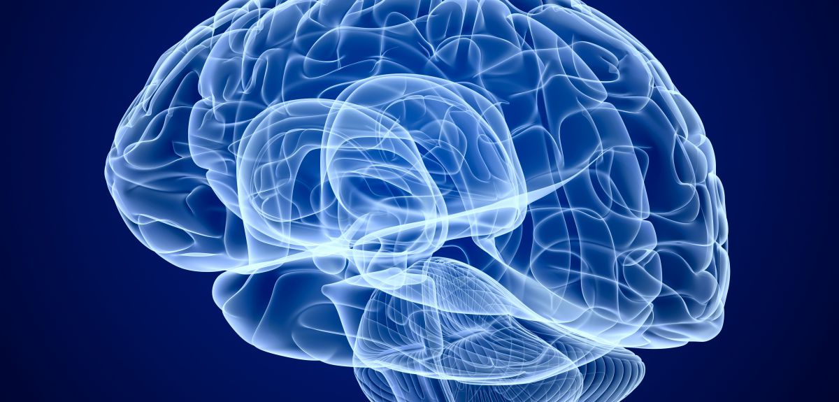 brain, human brain, scientists, individual characteristics, University of Zurich, Dr Jancke, news, mobile, NewsMobile, India