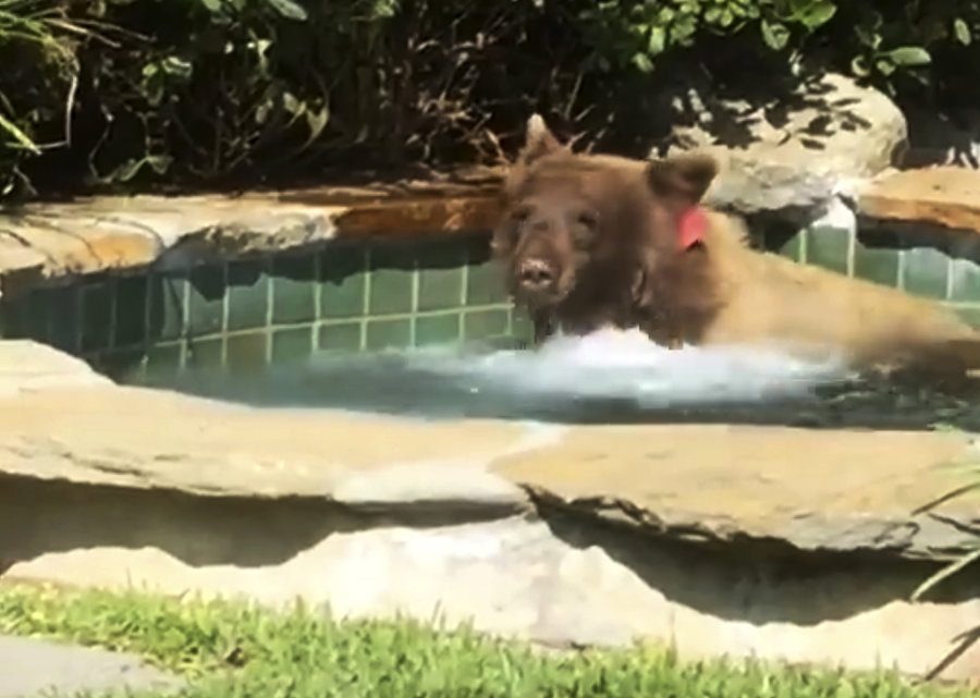 This bear is setting ideal summer goals for 2018