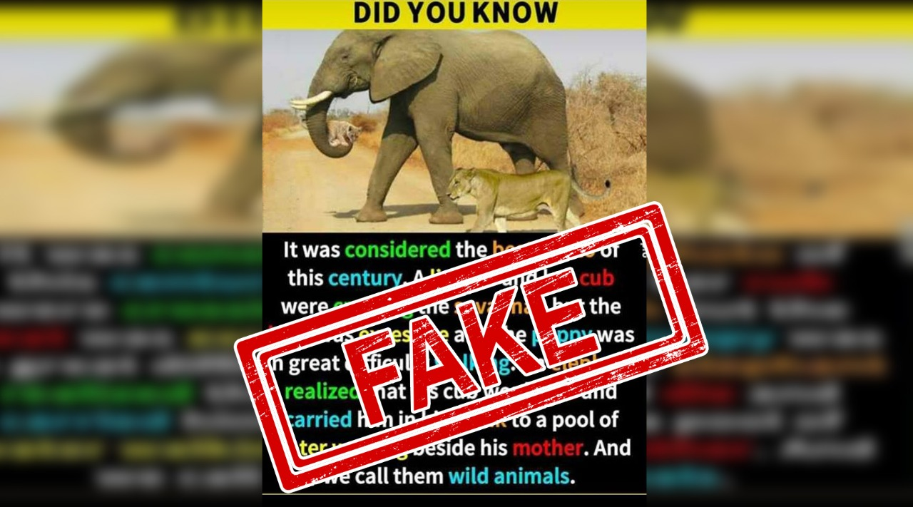 Elephant, Lionness, Cub, Lion, Animal, Zoo, Fake, Fact Check, Checker, Fact, NewsMobile, Mobile, news, India