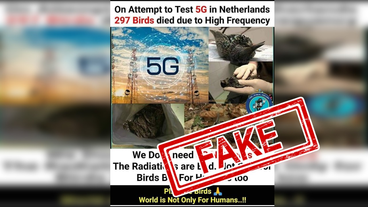 Netherlands, Bird, 297, Killed, Died, Fact Check, 5G, Test, Fake, Claim, NewsMobile, Mobile, News, India