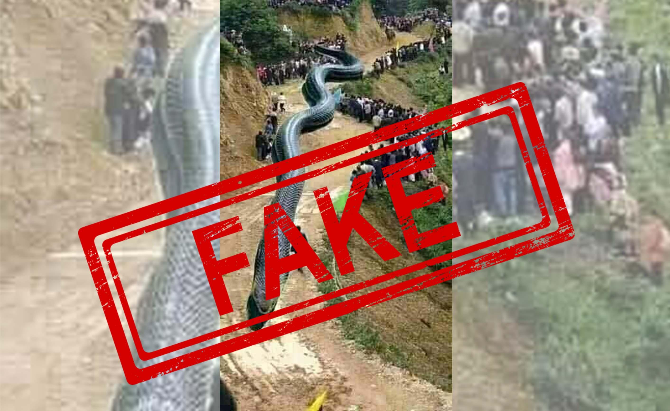 China, Snake, Giant, Earthquake, Newsmobile, Mobile, News, fact check, Fact Checker, India, FAKE