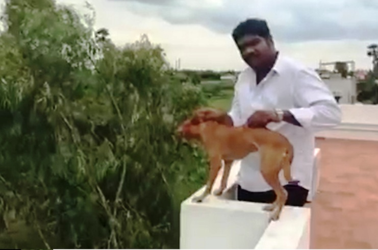 ghastly video, man throwing a dog, Viral,Facebook,