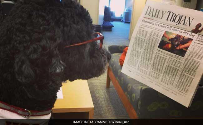 professor, dog, US university, 2-year-old dog, University of Southern California