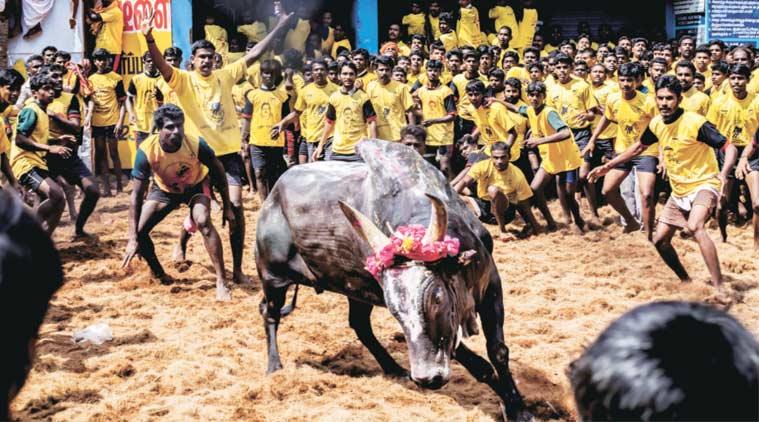X 'jallikattu'X Tamil diaspora in Sri LankaX Britain and AustraliaX World Tamil OrganisationX Tamil spor