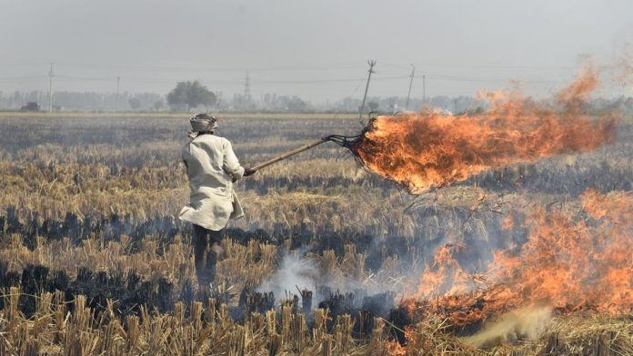 stubble burning, Gurgaon, Gurugram, Nirvana, Sector 50, Pollution, Pollutants, India, Haryana, Government, Municipal authorities gurgaon, Environmental ministry, India