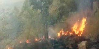 Fire, Tamil Nadu, Forest, Dead, NewsMobile