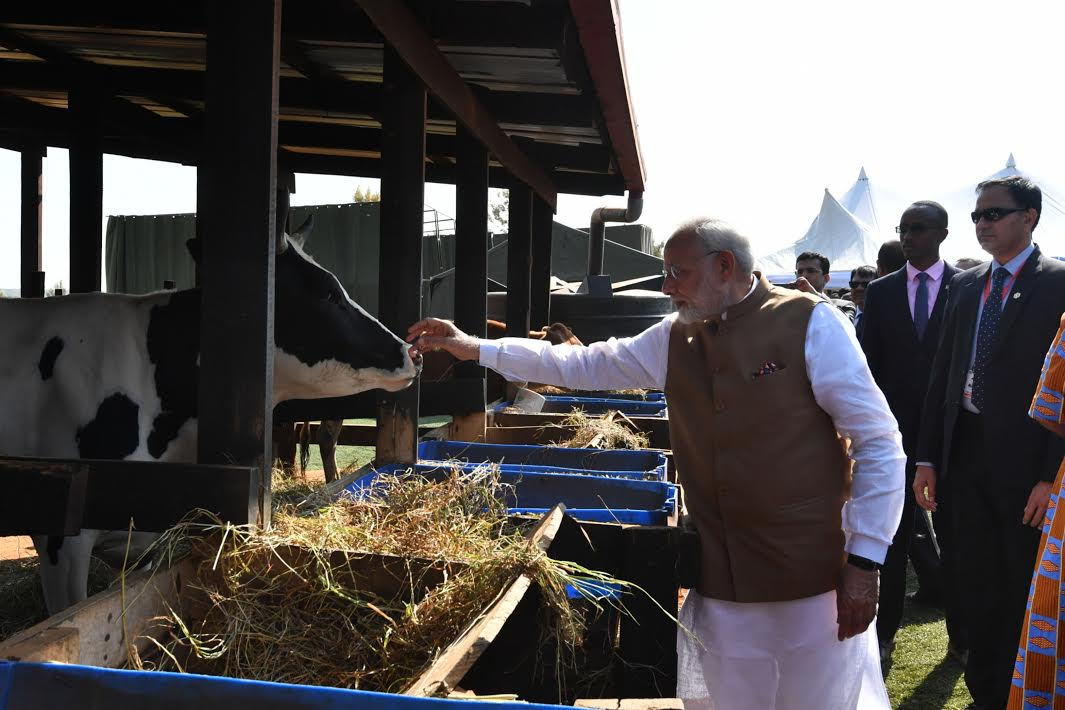 PM Modi, gift, 200 cows, Rwanda, village, Newsmobile, Mobile News, India, Prime Minister, Narendra Modi