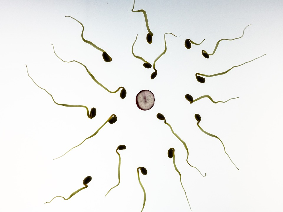 Molecule, identified, helps, sperm, egg cells, Reproduction, Science, NewsMobile, News For Kids, Kids News, India, Education, Mobile News, India
