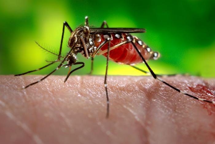 All you need to know about Zika virus; Rajasthan confirms 22 cases