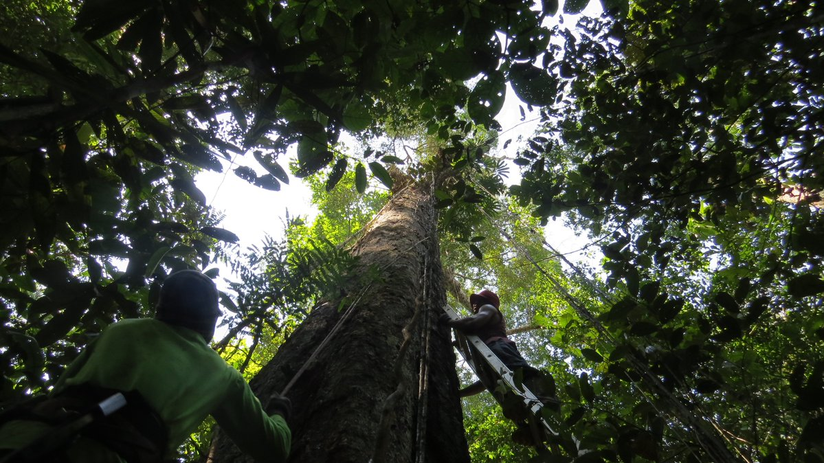 Amazon, Rainforest, Global warming, Scientists, Research, News Mobile, News Mobile India