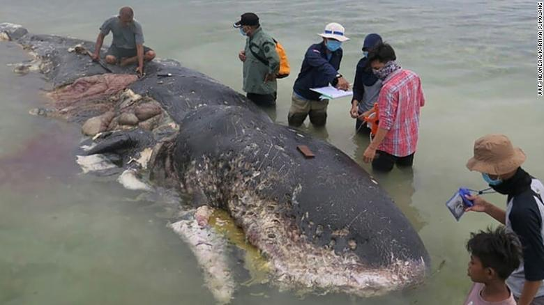 Shocking: More than 100 plastic cups found in this dead whale's stomach