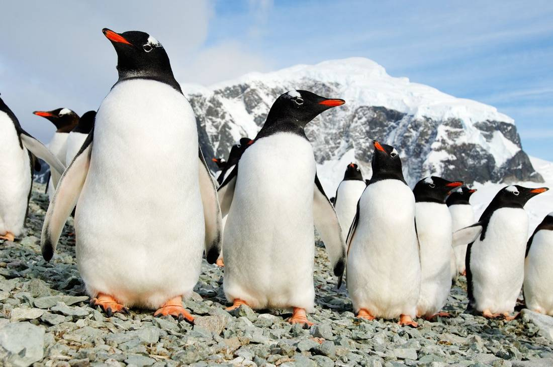 Are Antarctic birds exposed to human diseases?