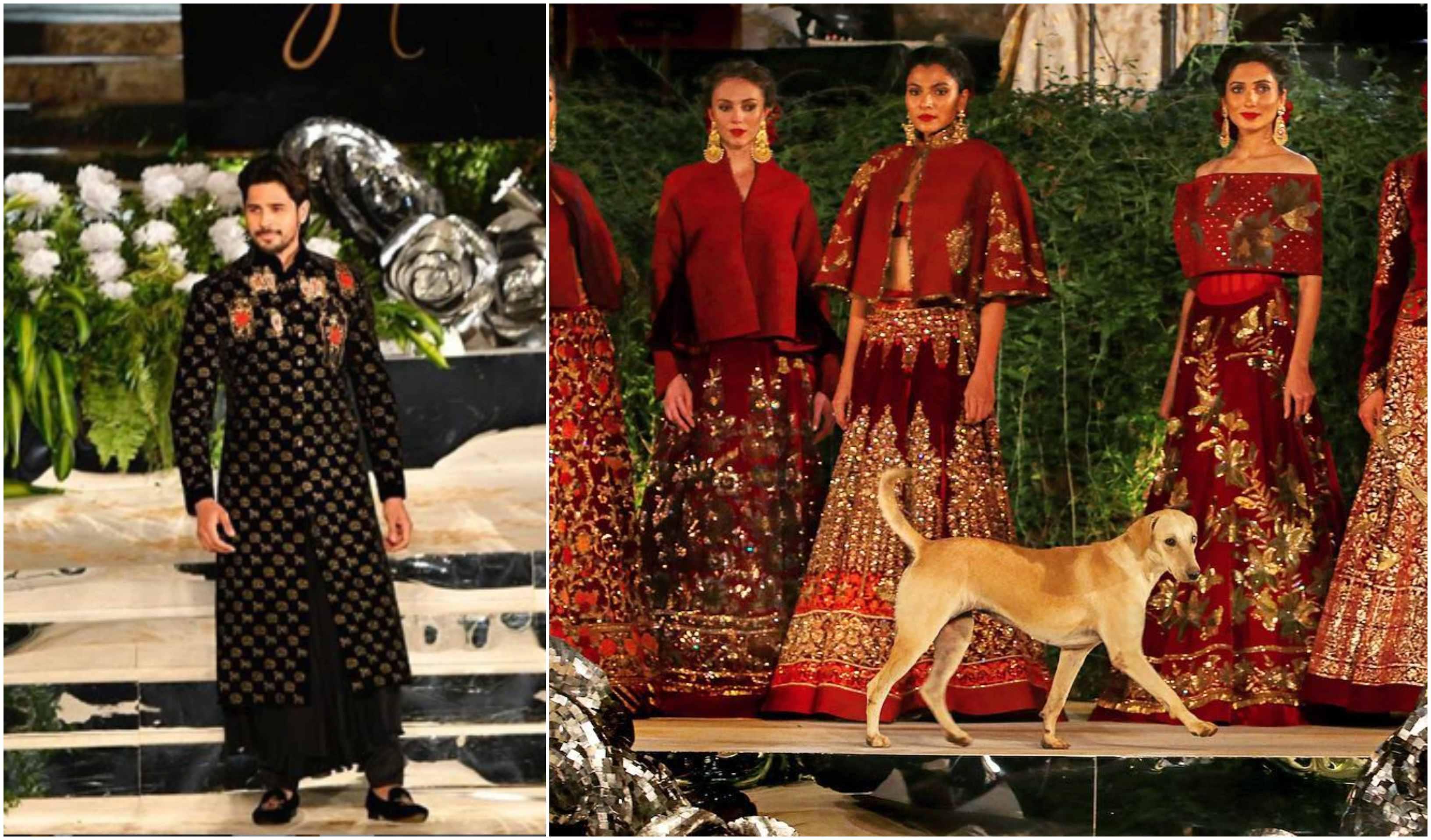 Sidharth Malhotra, Ramp, Walk, Dog, Stray, Movie, Bollywood, NewsMobile, Mobile, News, India