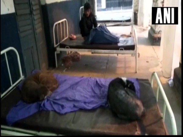 Stray dogs enjoy leisure time on government hospital beds