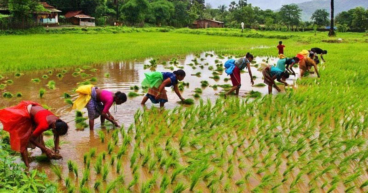 Agriculture, farm economy, Nirmala Seetharaman, Annual budget, drought, Narendra Modi, BJP, Parliament, India, NewsMobile