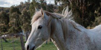 Horse, Eyelids, News for Kids, NewsMobile, NewsMobile India