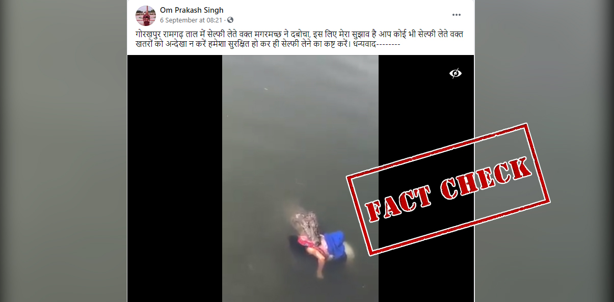 Fact Check: Old Video Of Crocodile Attacking A Lady In Mexico Falsely Linked To India